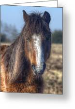 New Forest Pony Greeting Card