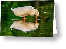 Pekin Duck Greeting Card