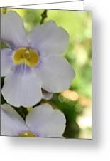 Purple Yellow Tropical Flower Greeting Card