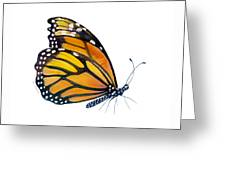 103 Perched Monarch Butterfly Greeting Card