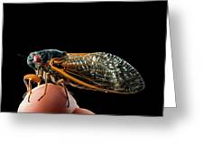 A Detailed View Of A Brood II Cicada Greeting Card