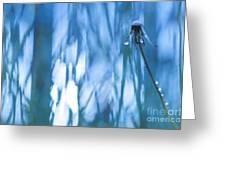 Dandelion Close-up View Backlit Greeting Card