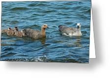 Falkland Islands, Bleaker Island Greeting Card