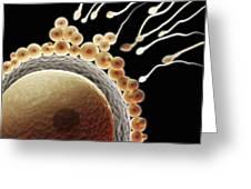 Fertilization Greeting Card