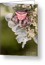 Flower Crab Spider Greeting Card