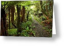 Forest Trail Greeting Card