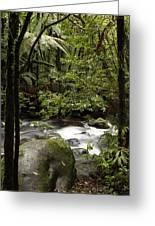 Jungle Stream Greeting Card