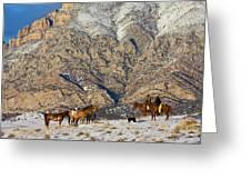 North America, Usa, Wyoming, Shell Greeting Card