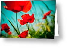 Poppy Field And Sky Greeting Card by Raimond Klavins