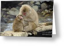 Snow Monkeys Greeting Card