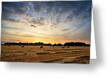 Stunning Summer Landscape Of Hay Bales In Field At Sunset Greeting Card