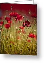 Summer Poppy Greeting Card