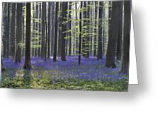 110506p237 Greeting Card