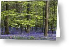 110506p248 Greeting Card
