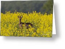 110714p143 Greeting Card