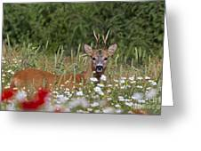 110714p324 Greeting Card