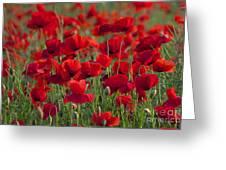 111216p031 Greeting Card