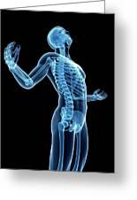 Human Skeletal System Greeting Card