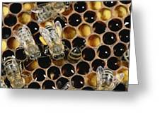 Honey Bees On Honeycomb Greeting Card