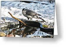1145p Northern Goshawk Greeting Card