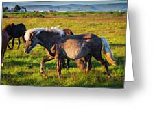 Iceland, Fauna & Flora Greeting Card