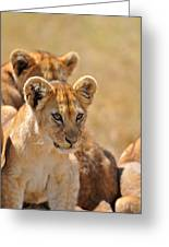 Lion With Cubs Greeting Card