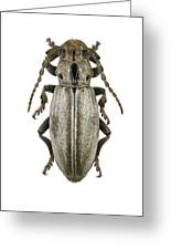 Longhorn Beetle Greeting Card