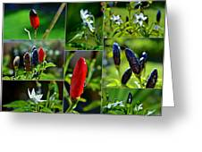 Red Chilli Pepper Greeting Card