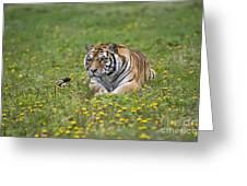 Siberian Tiger, China Greeting Card