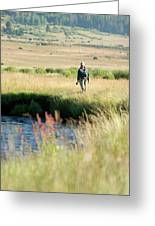 Young Woman Fly Fishing The West Fork Greeting Card