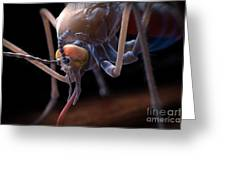Anopheles Mosquito Greeting Card
