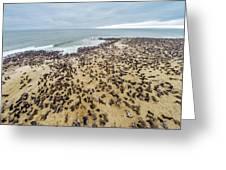 Cape Cross, Namibia, Africa - Cape Fur Greeting Card