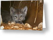Timber Wolf Pup Greeting Card