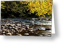 Williams River Autumn Greeting Card