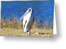 Wood Stork Greeting Card