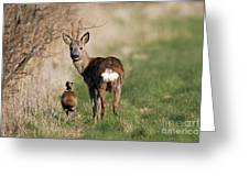 130201p187 Greeting Card