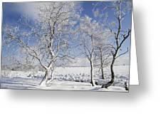 130201p335 Greeting Card