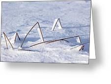 130201p362 Greeting Card