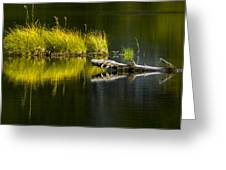 131005b-029 Forest Pond 2 Greeting Card