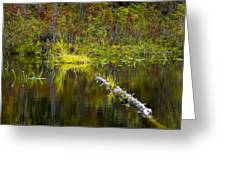 131005b-052 Forest Marsh 2 Greeting Card