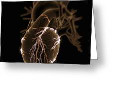 Coronary Blood Supply Greeting Card