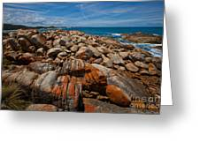 Point  Hicks  Greeting Card