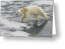 Polar Bear Walking On Ice Greeting Card