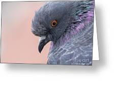 Rock Dove Greeting Card