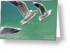 10760 Seagulls In Flight #001 Photo Painting Greeting Card