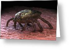 Tick Ixodes Greeting Card