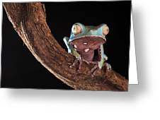 Tree Frog Greeting Card by Dirk Ercken
