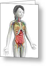 Human Anatomy Greeting Card