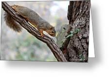 Eastern Fox Squirrel Greeting Card