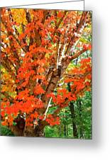 Fall Explosion Of Color Greeting Card